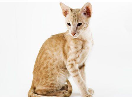 orinar-gato
