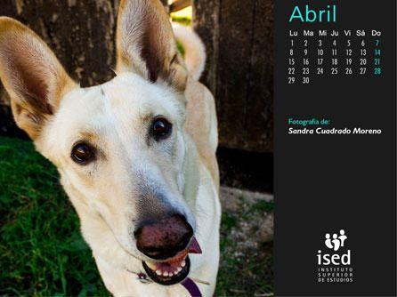 calendario-mascotas-2013
