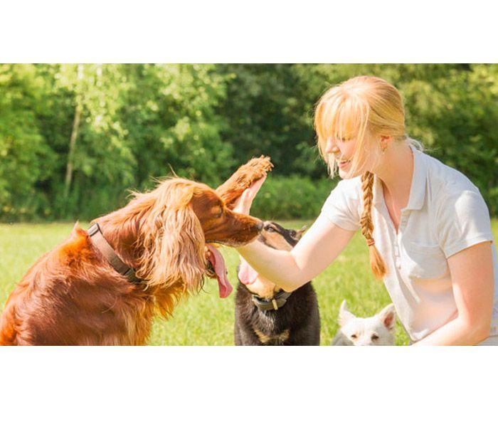curso de iniciación de adiestrador canino gratis