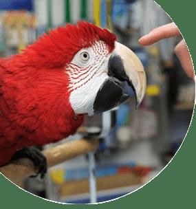 Técnico en animales exóticos