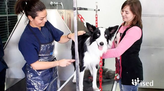 curso-peluqueria-canina-convocatoria-abierta