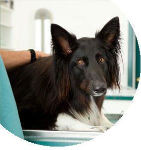Etología en la clínica veterinaria