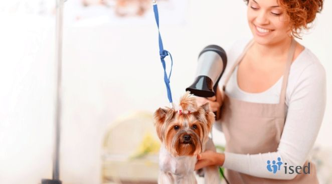 ised-curso-peluqueria-canina