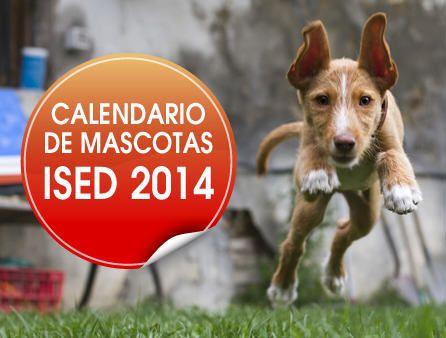 calendario-mascotas-2014