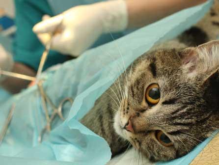 Auxiliar técnico veterinario