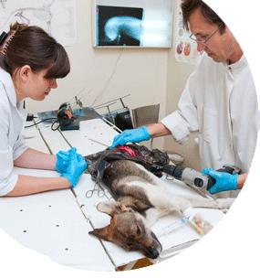 Técnico en urgencias veterinarias y cuidados intensivos