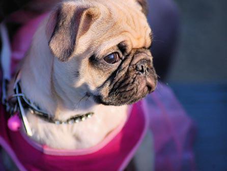 ISED Madrid presenta sus monográficos de veterinaria para el verano