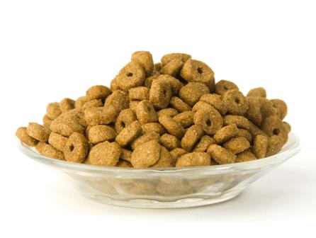 Charla gratuita de nutrición canina en ISED Bilbao
