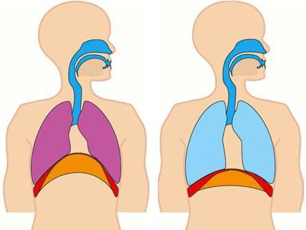 Curso de osteopatía diafragma