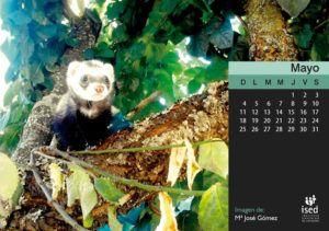 calendario mascotas ised