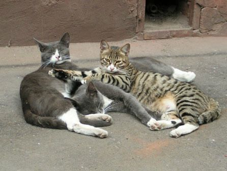 curso de auxiliar de clínica veterinaria