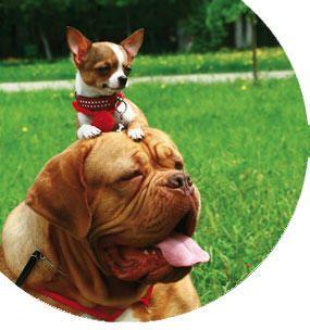 Curso de homeopatía en animales