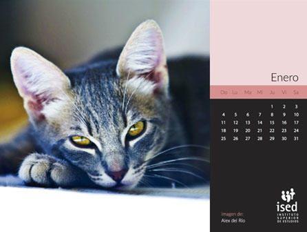 calendario de mascotas 2015