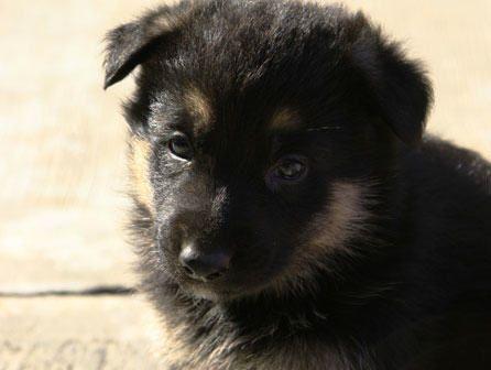 Curso de adiestrador canino