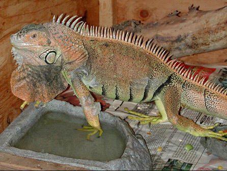 curso de técnico en animales exóticos