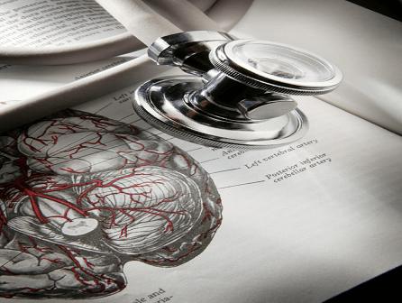 El cerebro - Curso Quiromasaje