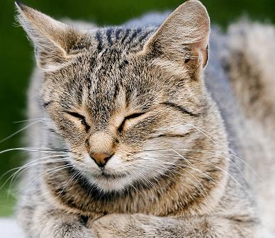 Los signos del dolor en los gatos | ISED curso Auxiliar Clínica Veterinaria