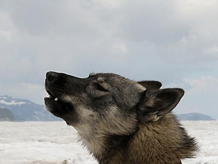 La historia del perro | Curso de Intervención Asistida con Animales