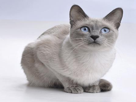 Cómo nos ven y sienten los gatos