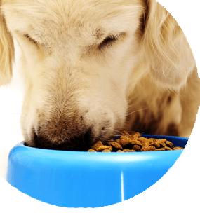curso de utrición y dietética veterinaria
