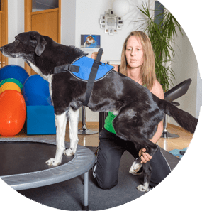 Curso de quiromasaje y rehabilitación en pequeños animales