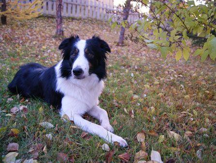 curso de educador canino