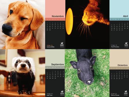 calendario mascotas 2015
