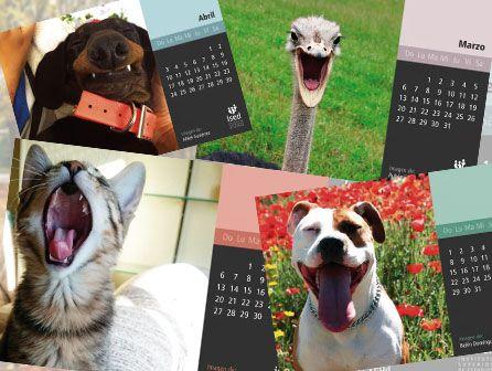 calendario de mascotas 2016