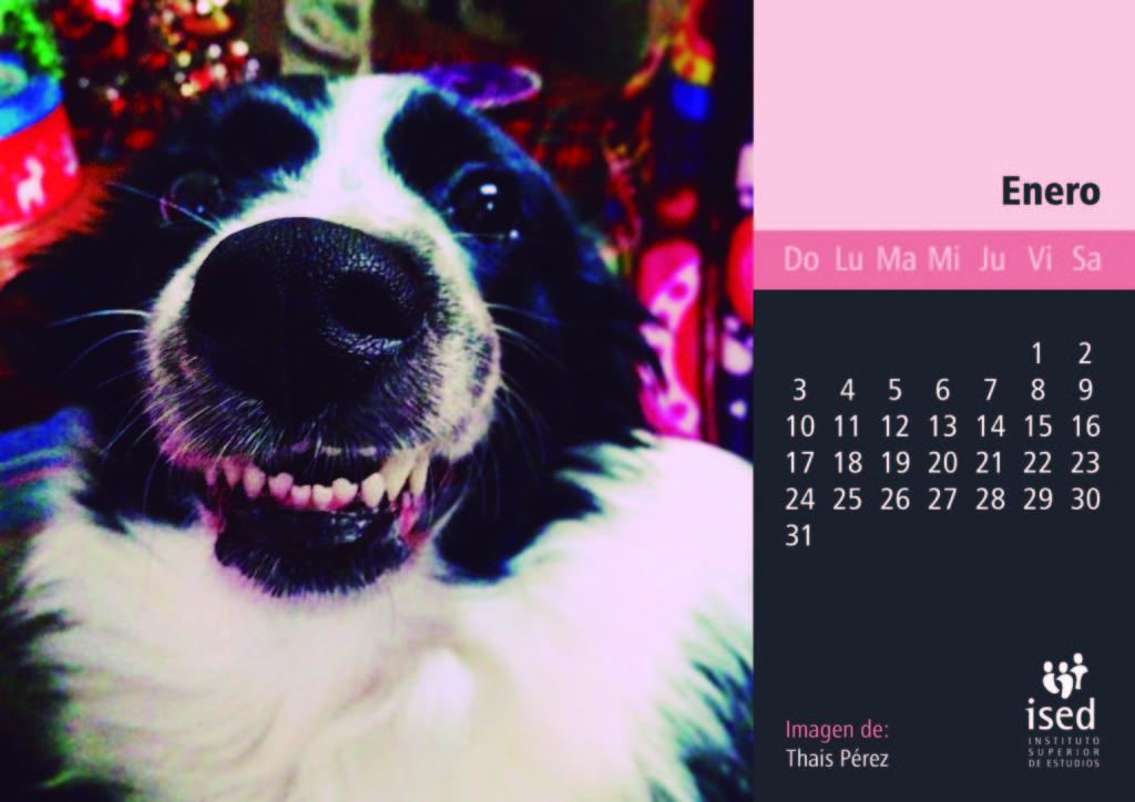 enero-calendario-mascotas