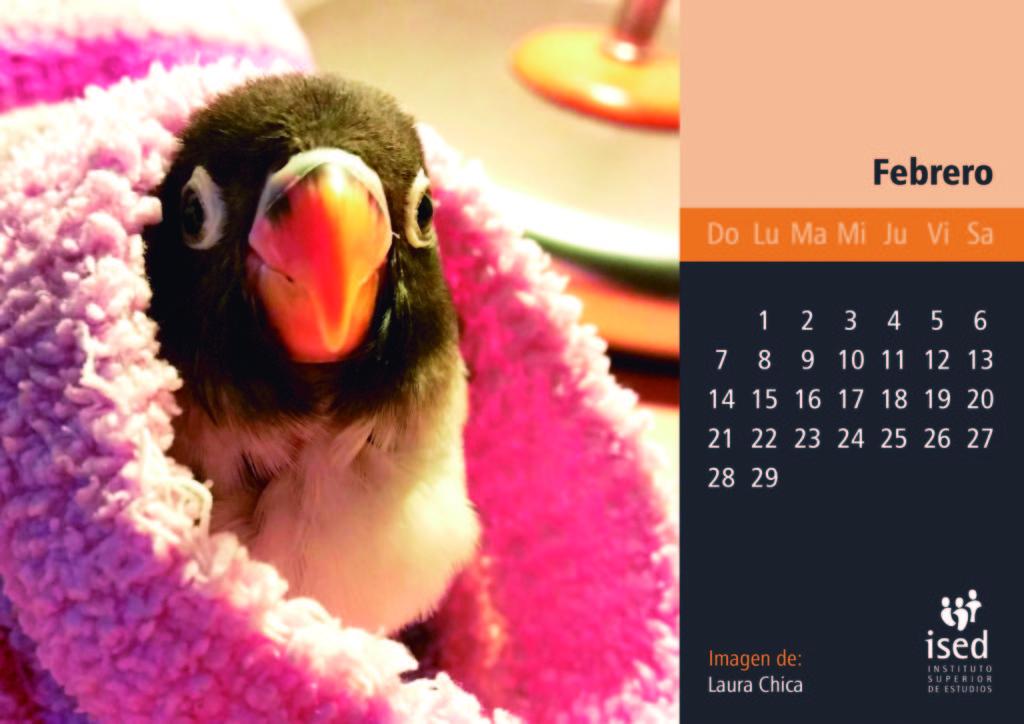 febrero-calendario-mascotas