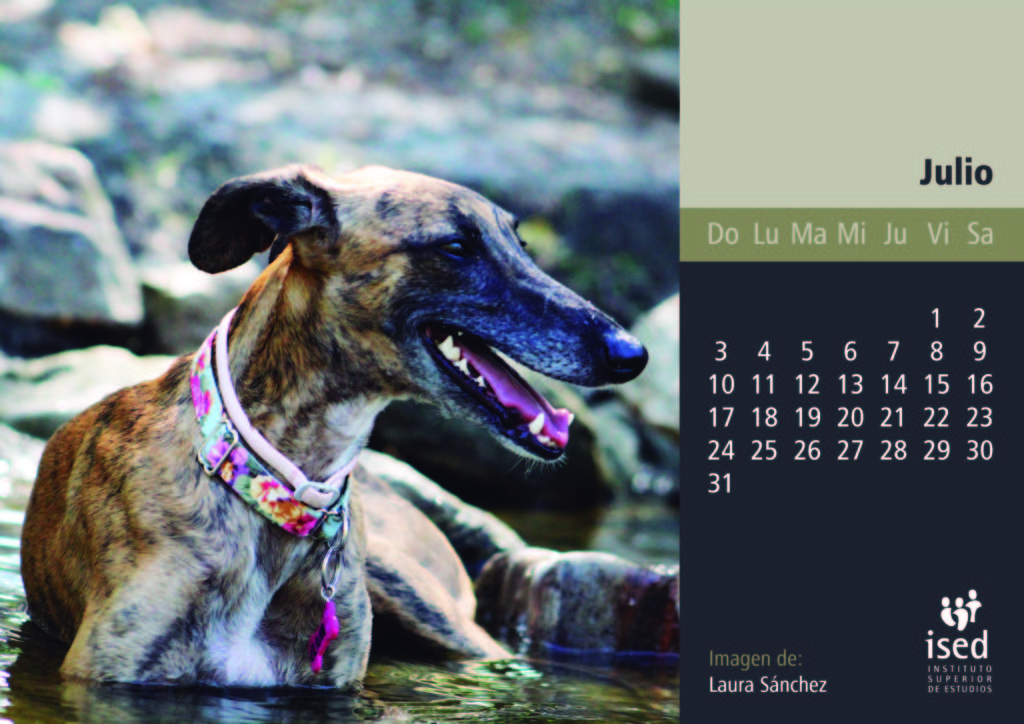 julio-calendario-mascotas