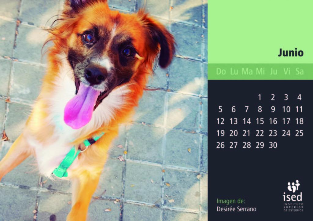 junio-calendario-mascotas