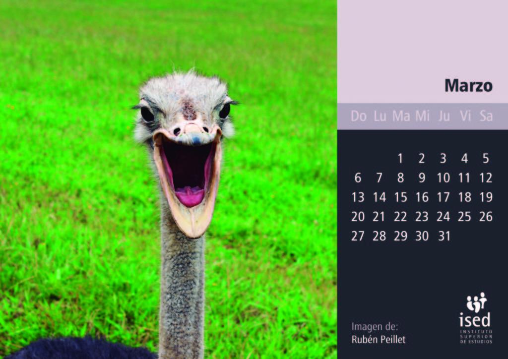 marzo-calendario-mascotas