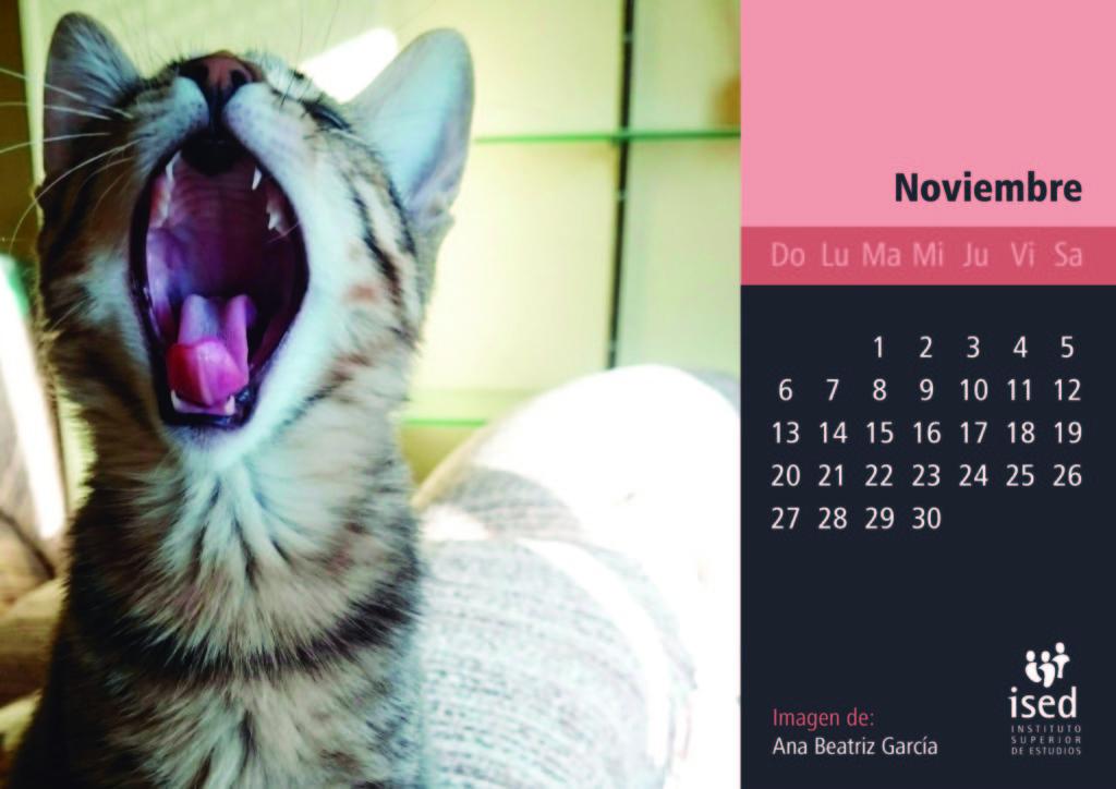 noviembre-calendario-mascotas