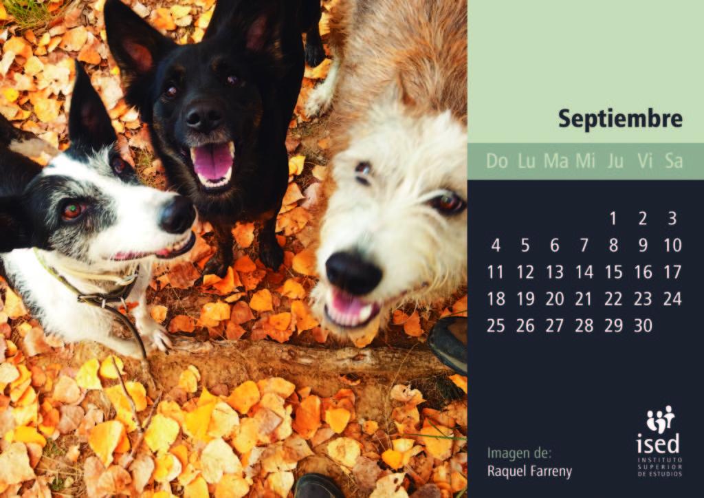 septiembre-calendario-mascotas