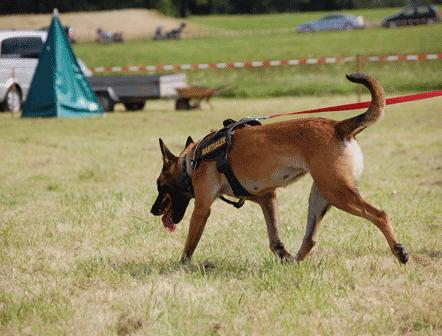 fotos de perros de busqueda y rescate