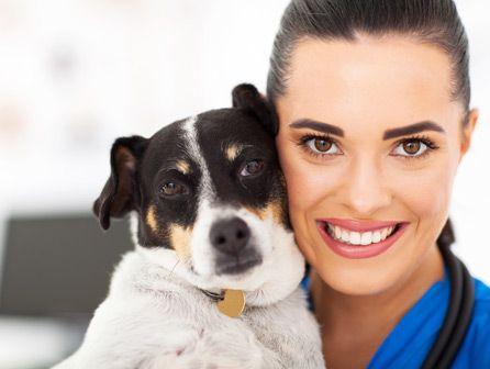 curso de auxiliar de veterinaria