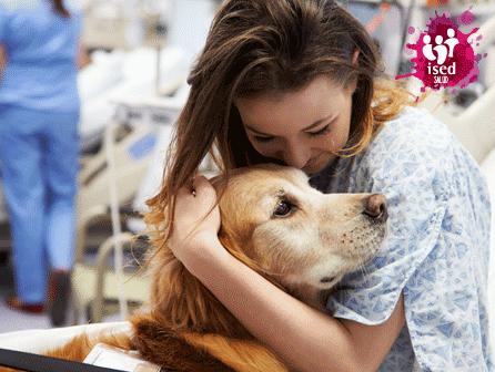 curso de Técnico en Intervención Asistida con Animales gratis