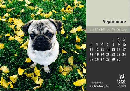curso de veterinaria - calendario ised 2017