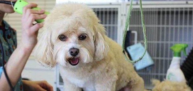 peluqueria-canina