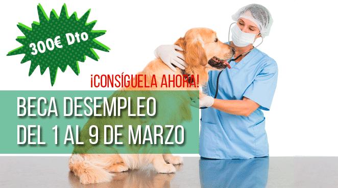 curso auxiliar veterinaria ised