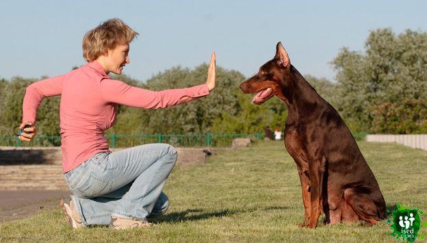 curso de iniciación gratuito de adiestrador canino en Bilbao