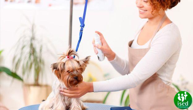 Modelo-imagen-blog-curso-de-peluqueria-canina