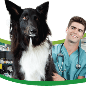 curso-ayudante-tecnico-veterinario