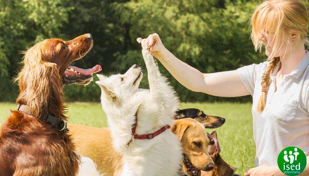 diferencias-comportamientos-perros