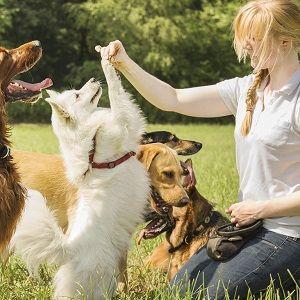 curso-educador-canino-ised-ec