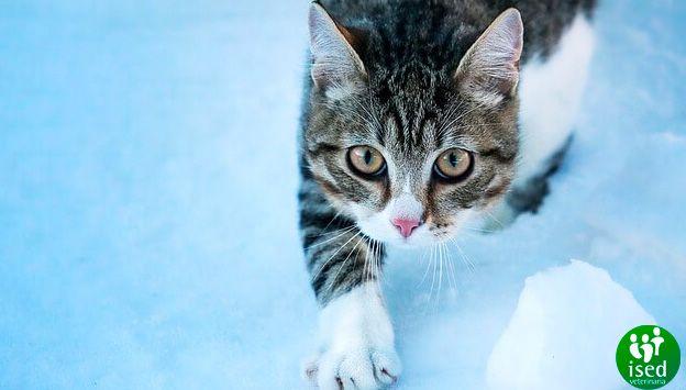 el-invierno-gatos
