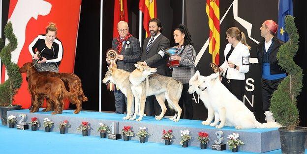 entrega-premio-mejor-pareja-ised-zaragoza-expo-canina