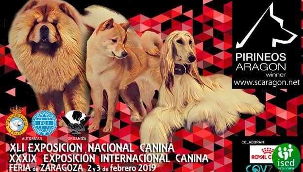 ised-zaragoza-exposicion-internacional-canina