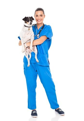 salidas-profesionales-veterinaria-cursos-ised